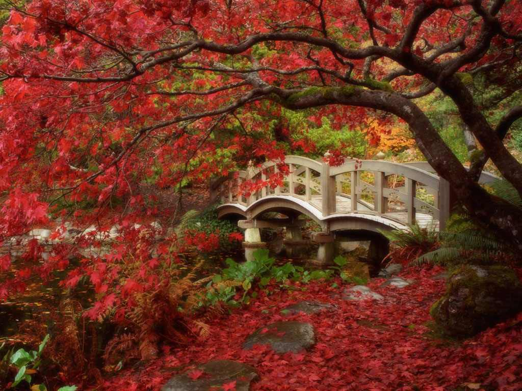 Garden wallpaper free free download wallpaper dawallpaperz for Flowers for japanese gardens