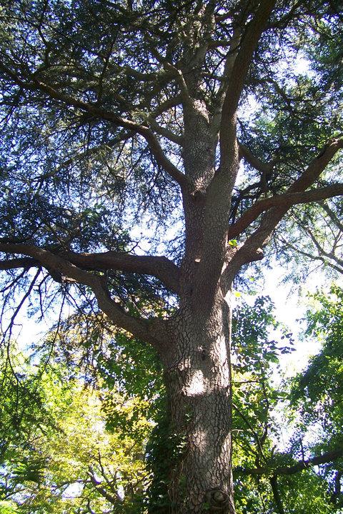 Fruit Trees In Staten Island