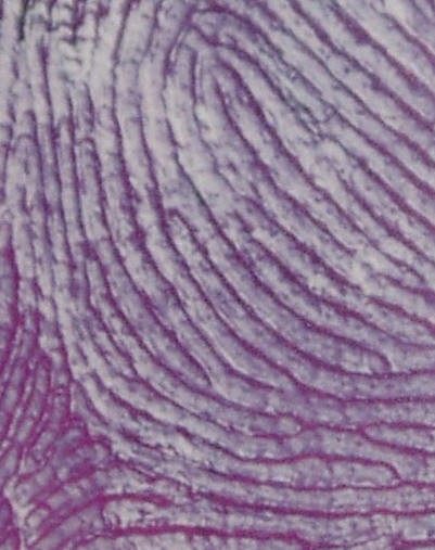 fingerprint identification+thesis