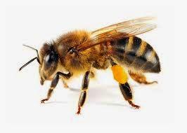 تفسير النحل في الحلم,معني حلم النحل في المنام Bees in a dream