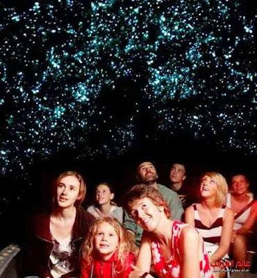 أضواء الديدان، الغرائب والعجائب، عالم العجائب