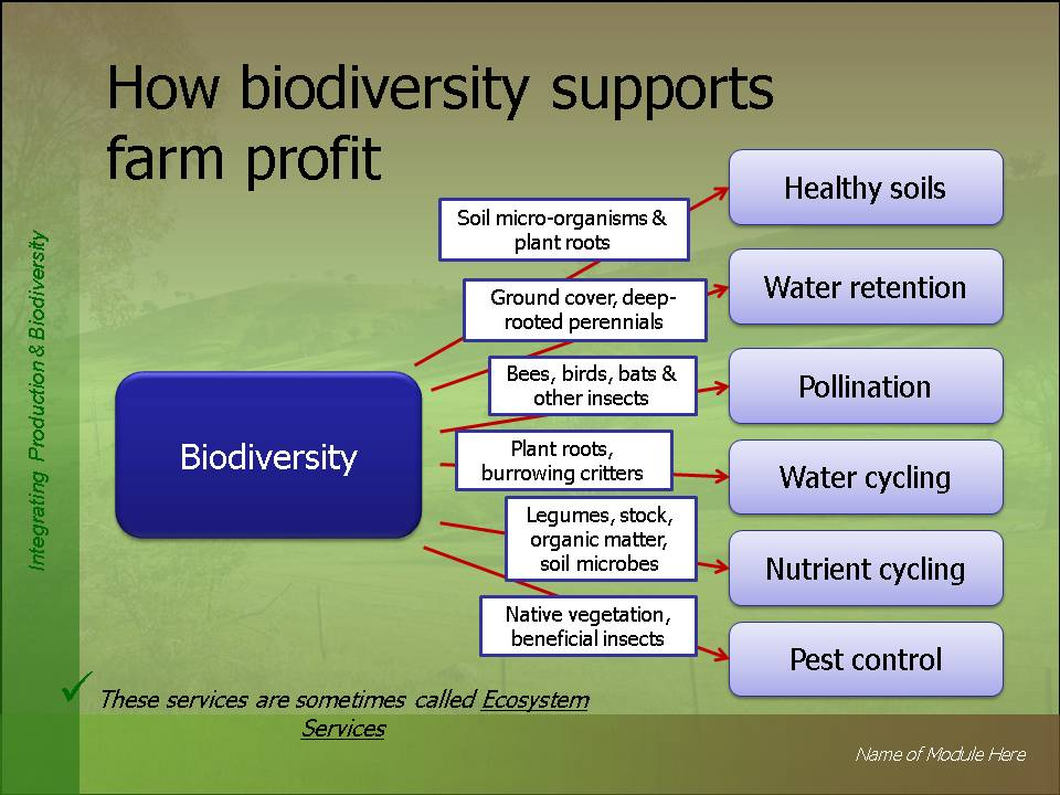 the importance of biodiversity loss Value of biodiversity biodiversity is of both aesthetic and practical importance each and every component of nature has its own unique, immense value for more than one reason the multiple uses of biodiversity or biodiversity value have been classified by mcneely et al in 1990 as follows 1.
