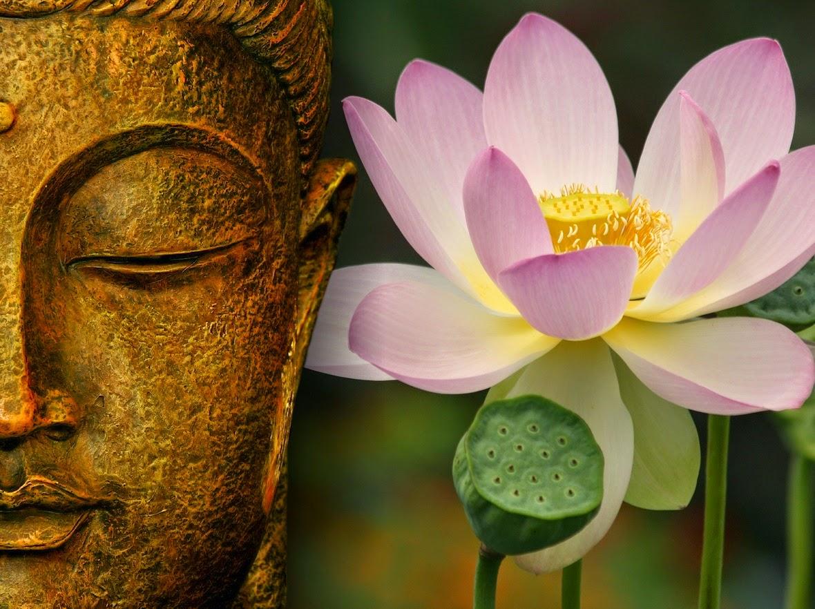 Buda e a Flor-de-Lótus