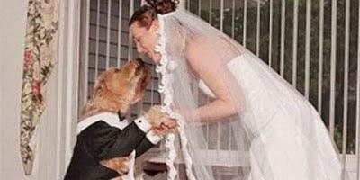 Orang yang Menikah dengan Hewan