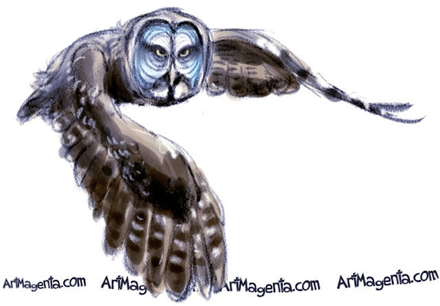Great Grey Owl sketch painting. Bird art drawing by illustrator Artmagenta.