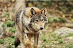 Sparr-Male--Hunter/Fighter  ~Kio
