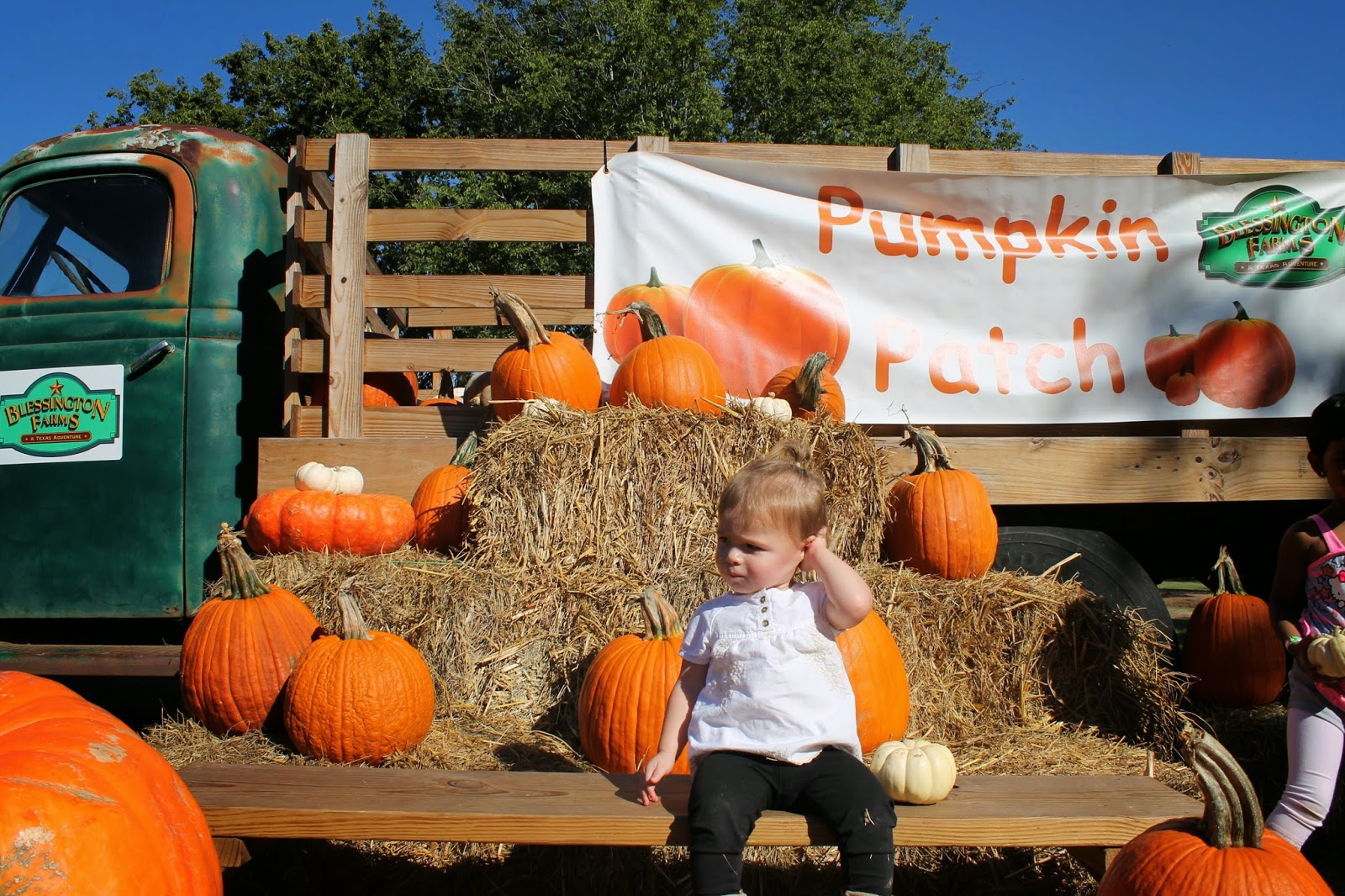 Pumpkin patch at Blessington farms | Bubbles and Gold (www.bubblesandgold.com)