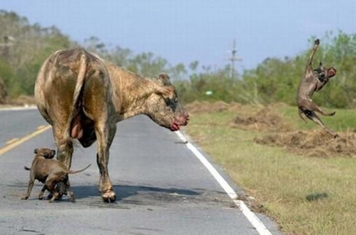 Video : un león mató a una leona a la vista de todos en el  - imagenes de animales salvajes peleando