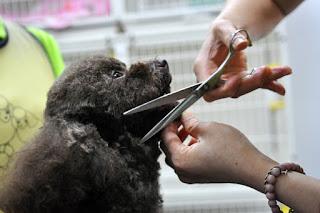 Ảnh cắt tỉa lông cho cún