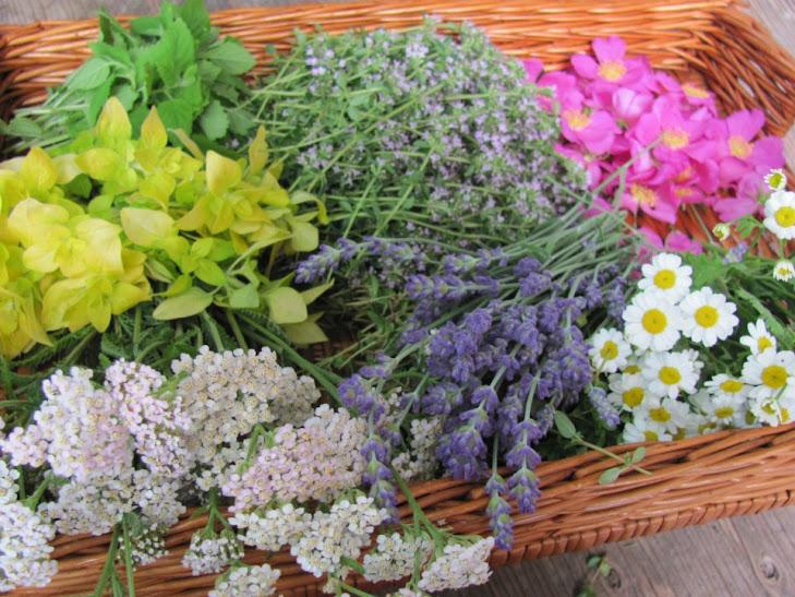 Cueillette d'herbes et de fleurs