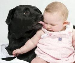Los perros tienen sentimientos