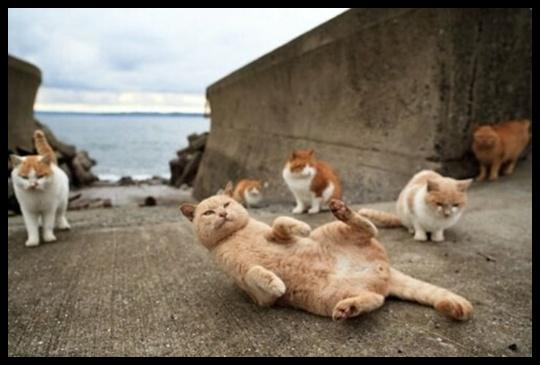 galeria com vinte e cinco imagens de gatos
