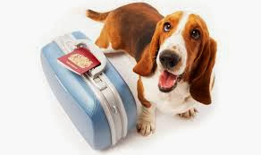 Travelling+with+pets Travelling Tips For Pets On Planes, Trains Or Ships
