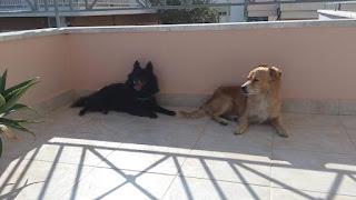 Βρέθηκαν δύο αρσενικά σκυλάκια στην Αγ. Βαρβαρα, Παλουκια Σαλαμινας.