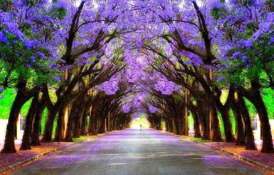 Matlamat dan tujuan kehidupan didunia ini hanya satu arah