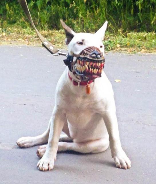 عجائب الدنيا وهل تعلم - كمامة تحول كلبك اللطيف إلى شرس