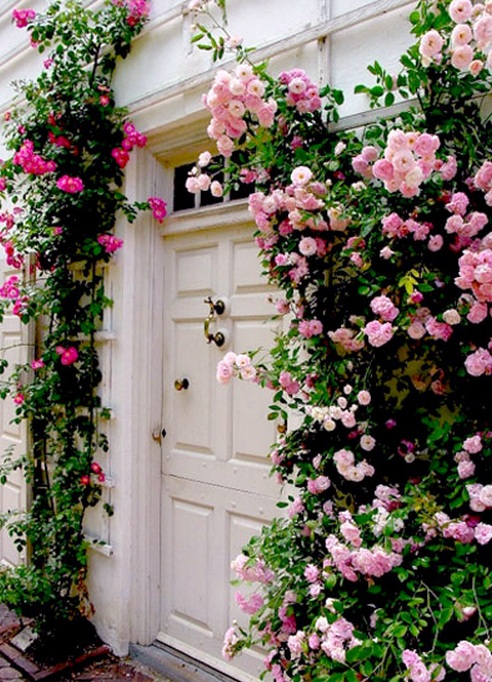 Floral front door, blossoming vine
