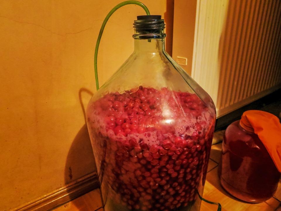 Как сделать великолепное вишневое вино 341