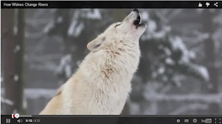 http://theshrug.com/they-brought-wolves-to-yellowstone-but-they-had-no-idea-this-would-be-the-result/
