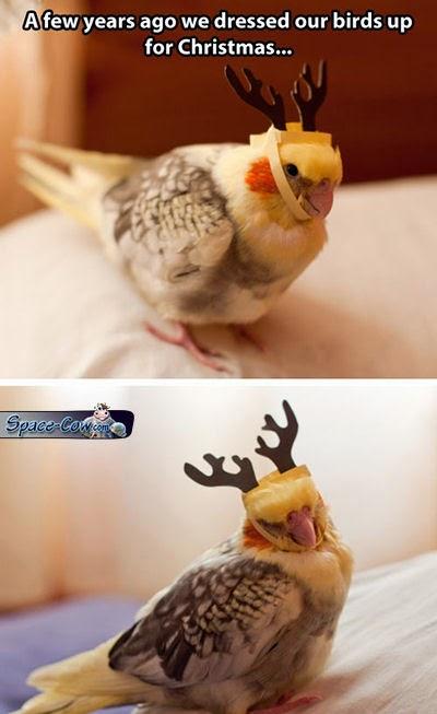 funny cute bird costume