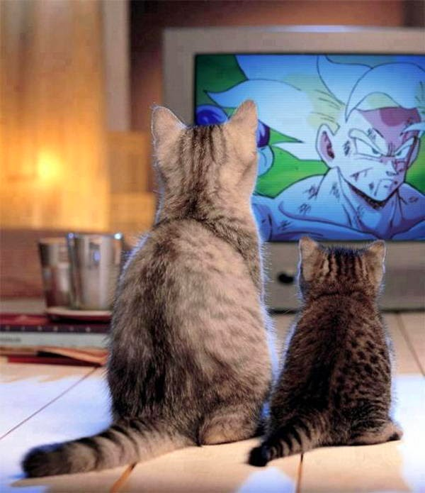 Funny cats - part 99 (40 pics + 10 gifs), cat pictures, kitten and momma cat watching tv