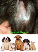 gambar penyakit tumor telinga anjing