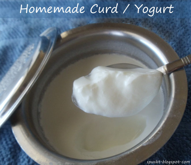 spusht | fresh homemade yogurt | how to make curd at home