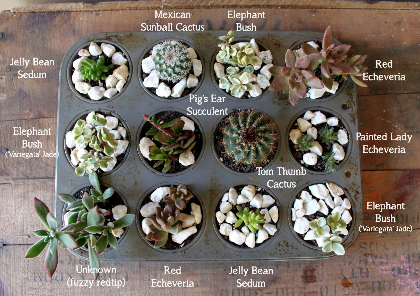 Lost little things upcycled succulent planters for Soil for succulents