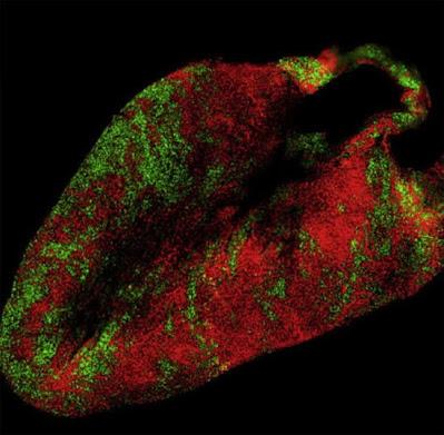 mikroskopia fluorescencyjna
