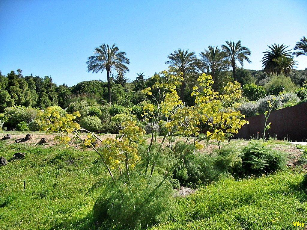 Andatori jard n bot nico barcelona for Barcelona jardin botanico