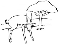 Antelope Free Printable Kids Coloring Pages