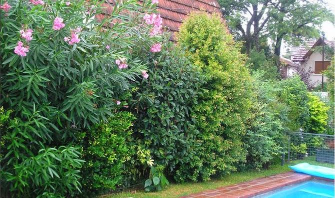 Arte y jardiner a setos vegetales en dise o de jardines - Setos de jardin ...