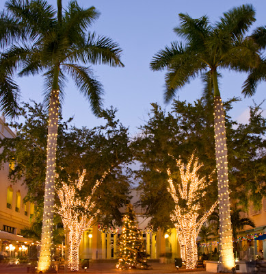 Palm tree with christmas lights in the tropics