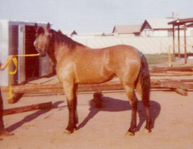 Sandy at 8 years old