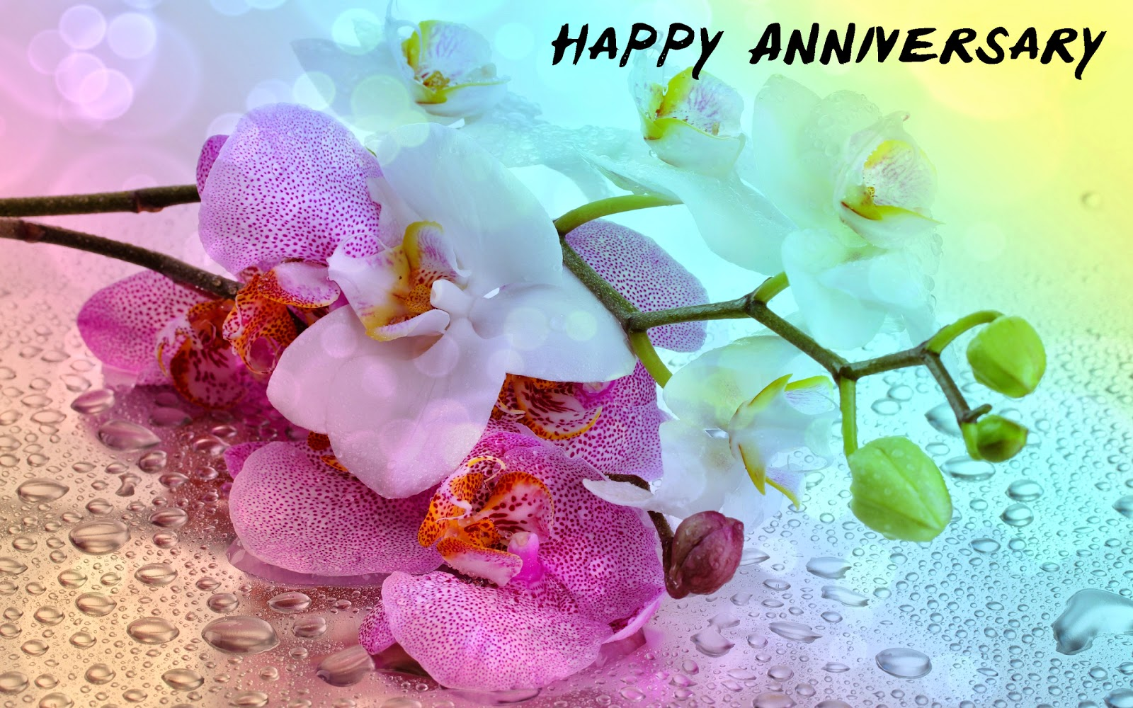 Special Anniversary HD Images, Best Wishes Cards  Festival Chaska