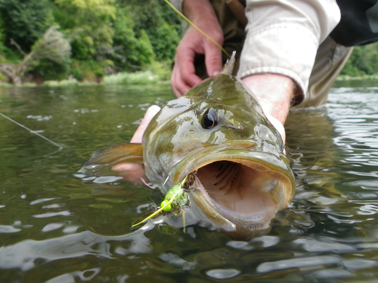 Brian marz 39 s fly fishing oregon blog umpqua bass report for Smallmouth bass fly fishing