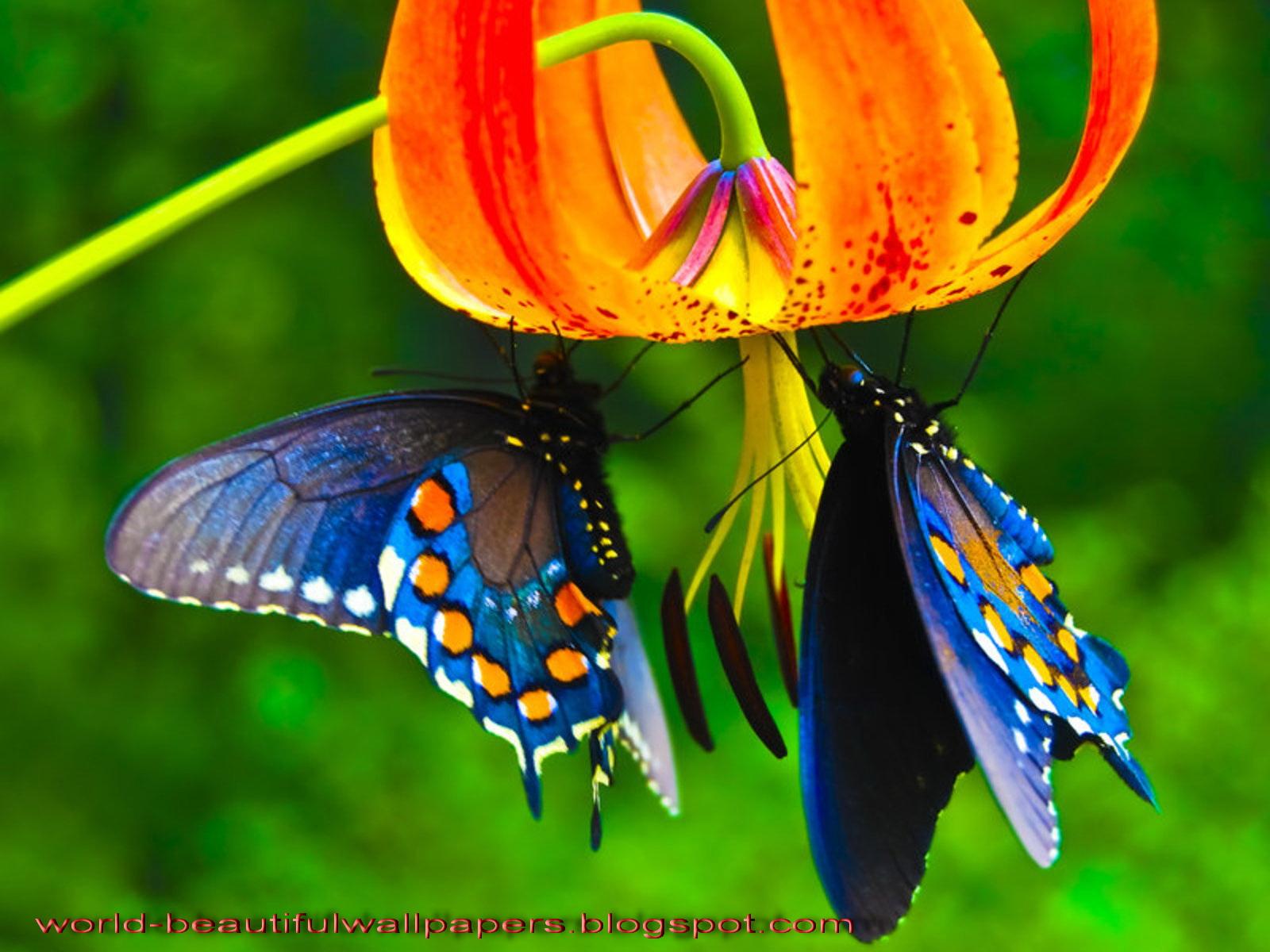 Beautiful wallpapers beautiful butterflies wallpaper for Butterfly wallpaper