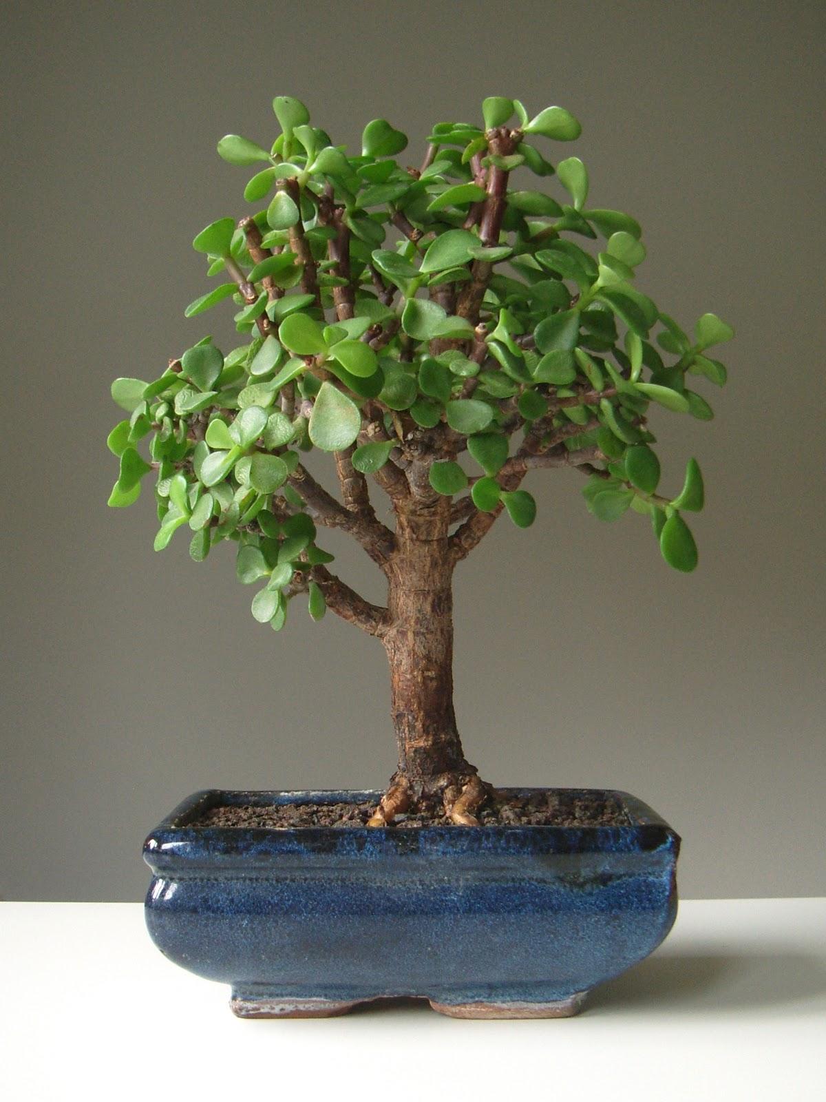 Plant Number 47 KARTAR