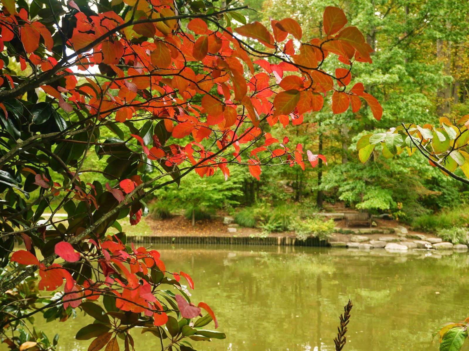Gardens duke fall foliage and flowers - Gardening in fall ...