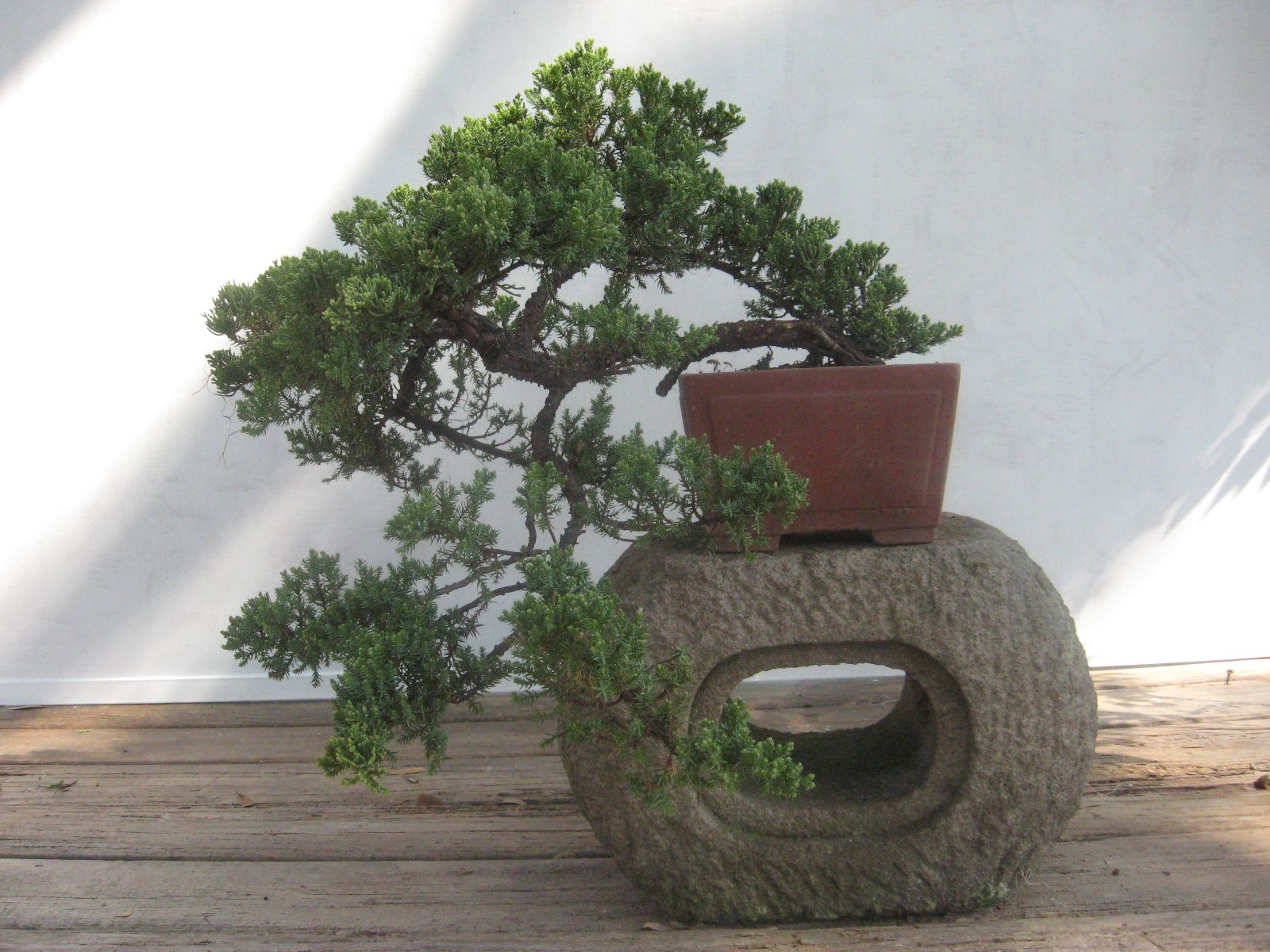 Bonsai Beginnings May 2014