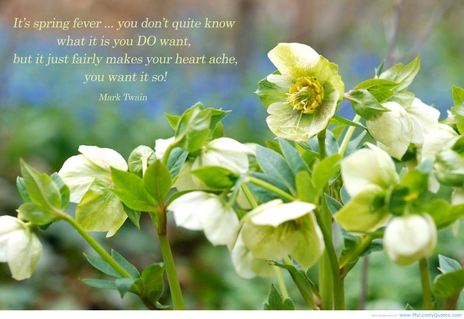 Quotes on spring, quotes about spring  Amazing Wallpapers