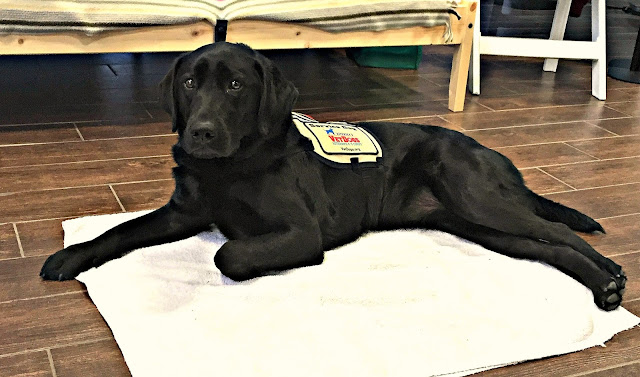 Black lab in service vest lying on mat in front of cot at Purina Better With Pets 2015