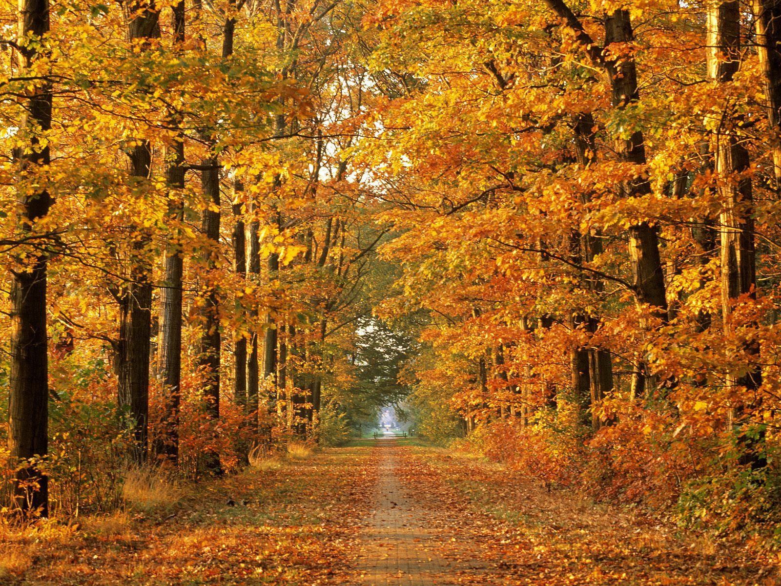 autumn season wallpapers hd - photo #48