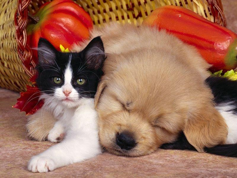 Pictures Of Cute Cats Wallpapers And Puppy A Kitty Cat Is Sitting Together In Beautiful Basket Picture