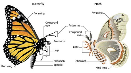 """death of a moth comparison between Rhetorical analysis essay: """"the death of the moth""""–virginia woolf it is often said that death is an inescapable inevitability in life in virginia woolf's narration """"the death of the moth,"""" the struggle between life and death is depicted exactly as such—a battle that is not, in the end, ever won."""