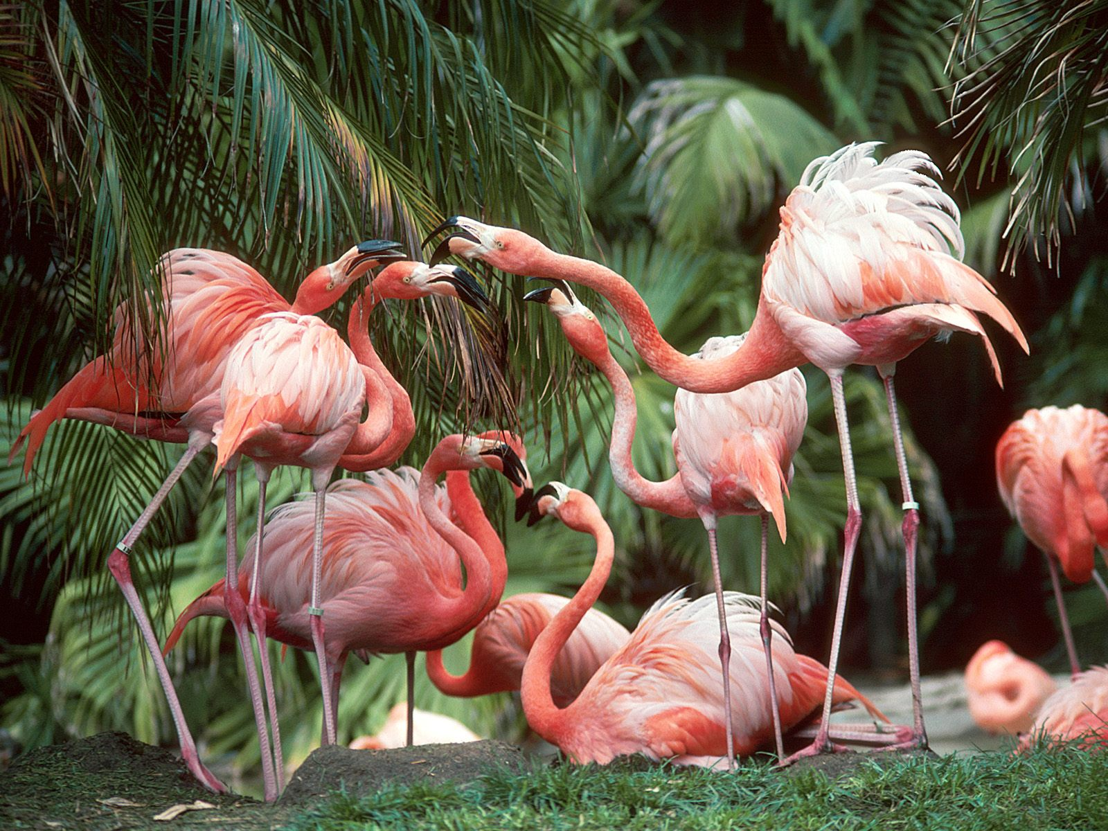 http://1.bp.blogspot.com/-QxQNdFEhiII/UEIShuBdNkI/AAAAAAAAB8c/OrikxLPOgL4/s1600/free-bird-wallpaper-1600x1200-0065.jpg