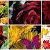 Magnificas rosas y flores animadas con movimiento - Imágenes  para compartir en facebook