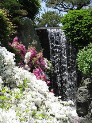 Cascada sobre fondo de flores blancas
