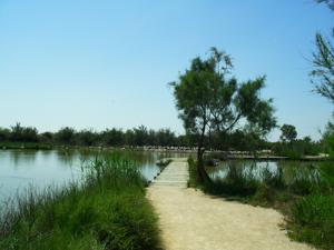 Disabled Travel -  Easy Access Path Wetland Bird Park Parc Ornithologique, Camargue