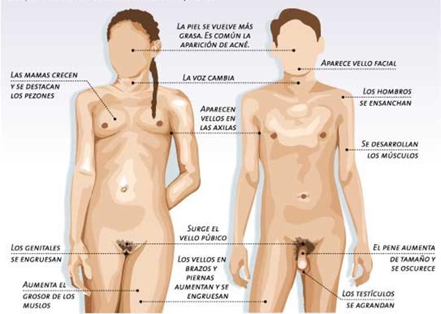 Resultado de imagen de cambios fisicos en la pubertad